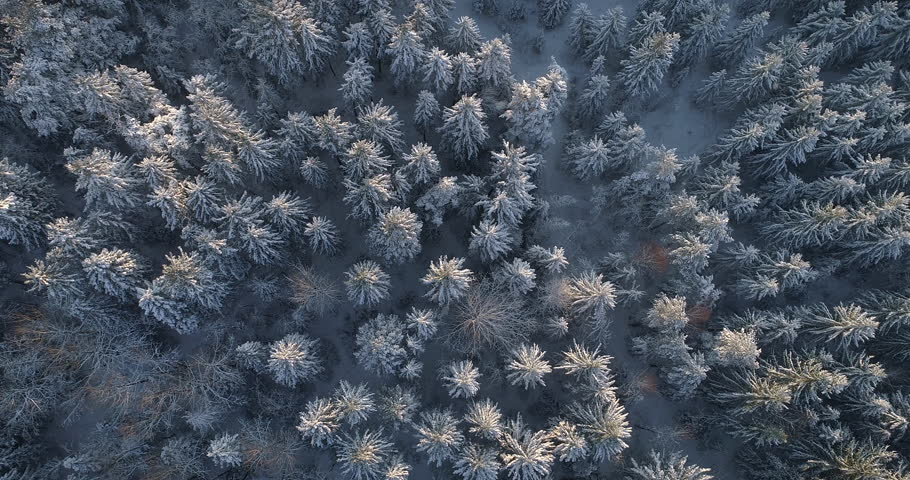 Aerial Top Down Flyover Shot of Winter Spruce and Pine Forest. Trees Covered with Snow, Rising / Setting Sun Touches Tree Tops on a Beautiful Sunny Day. Shot on 4K UHD Camera.