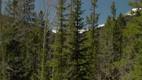 4k Aerial Shot of A Forest Tree Line Surrounded by Snow Covered Mountains. Shot Flat.