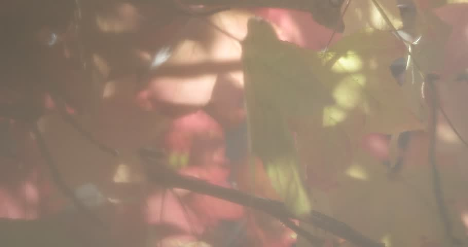 Header of liquidambar