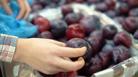 A close-up of a female hand checks the plums, removes the broken and rotten fruits to the side.