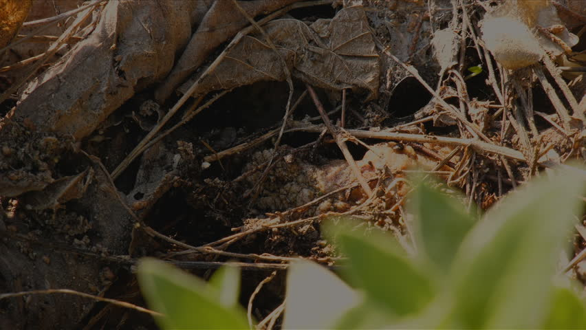 Ants moving eggs to another location | Shutterstock HD Video #1011453449