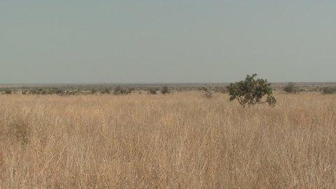 Savannah Savanna Kruger National Park Dry Season in South Africa