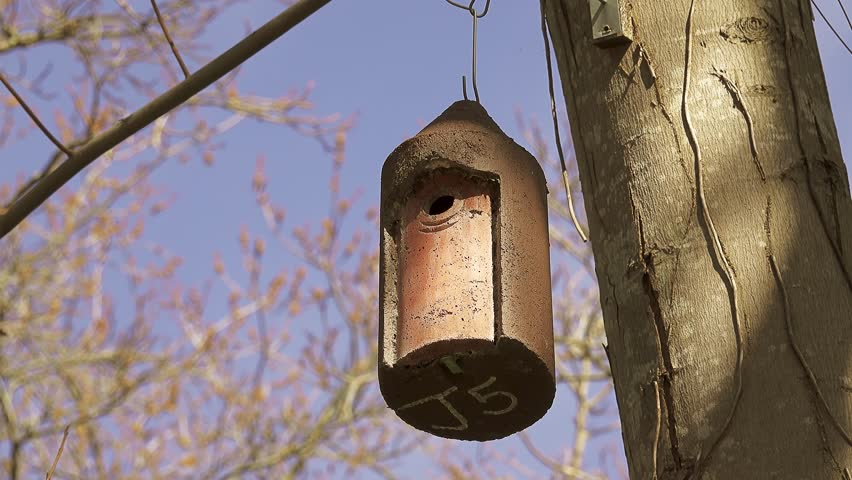 Small birdhouse hanging on tree branch in city park. | Shutterstock HD Video #1011494189