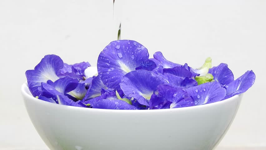 Pea flowers in white bowl with poring water clips,pea flowers footage