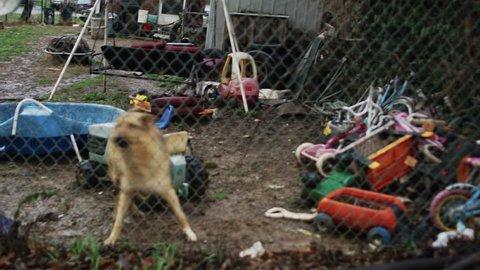 Dog Barking Behind Fence Yard German Shepherd