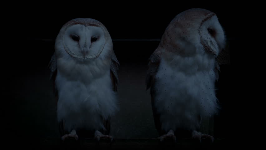 Owls On Perch Outside Old Barn In The Evening