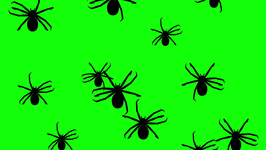 Invasion of Hordes of Spiders  Stock Footage Video (100% Royalty-free)  1011772829 | Shutterstock
