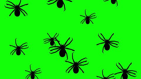 Invasion of hordes of spiders. Crowd of creepy arthropods runs on green chroma key, black silhouettes fill the screen and turn into a black backdrop, 3D animation.