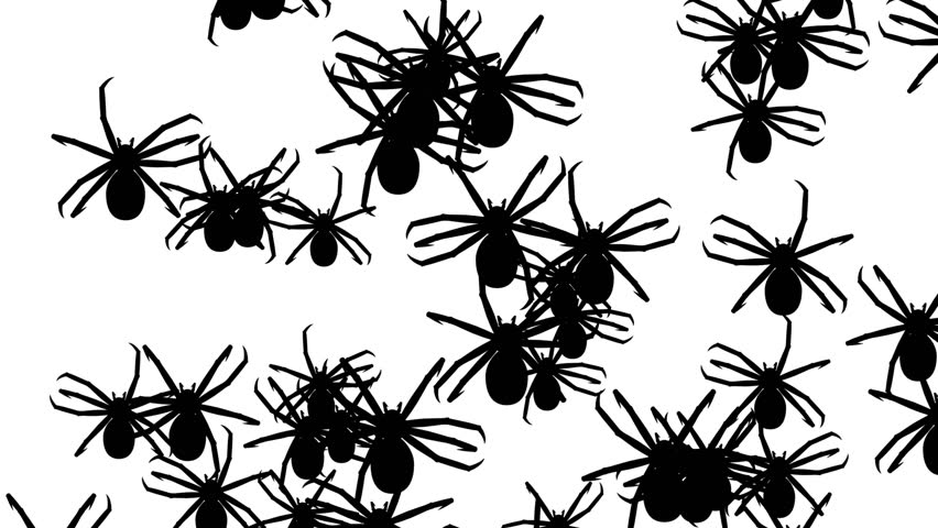 Invasion of Hordes of Spiders  Stock Footage Video (100% Royalty-free)  1011772859 | Shutterstock