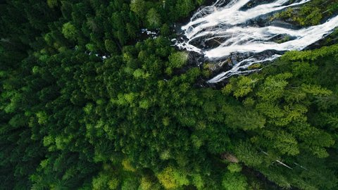 Birds Eye View Aerial Above Huge Waterfalls in Evergreen Tree Rainforest Canopy