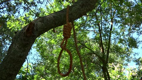 Noose Thrown Over Oak Tree Branch