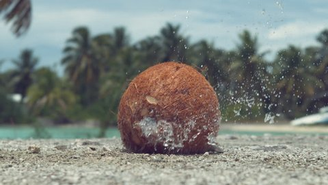 SLOW MOTION, CLOSE UP: Hard coconut gets thrown at concrete ledge and cracks wide open. Pieces of coconut shell and refreshing coconut water fly up in the air after the fruit falls from the tree.