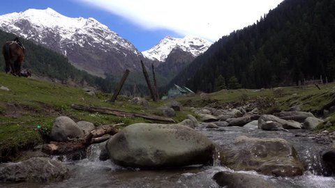 Waterfall at Aru Valley, Pahalgam, Kashmir,India. Horses walking on the beautiful valley of Kashmir. Destination,Tour,Trip and tourism concept.