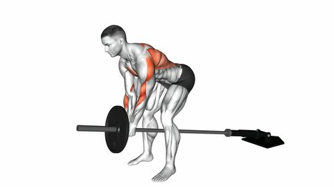 Barbell bent-over row exercise. Anatomy of fitness and bodybuilding. Targeted muscles are colored in red. 3d