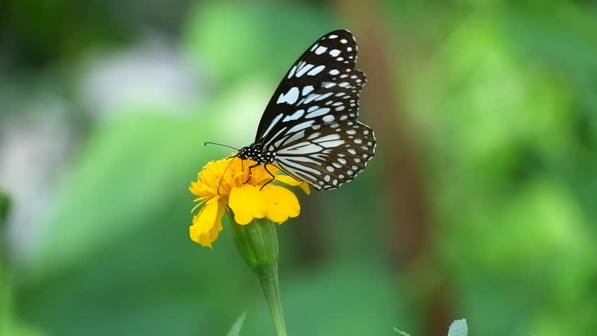 Butterfly on flower, Butterfly feeding on flower #1012375109