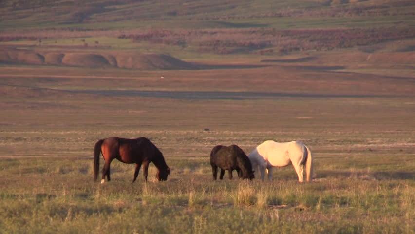 Beautiful Wild Horses in the Utah Desert