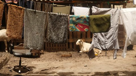 Dakar, Senegal: laundry hanging to dry and goats in back lot of house. Africa.