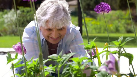 gardening and people concept - happy senior woman planting flowers at summer garden