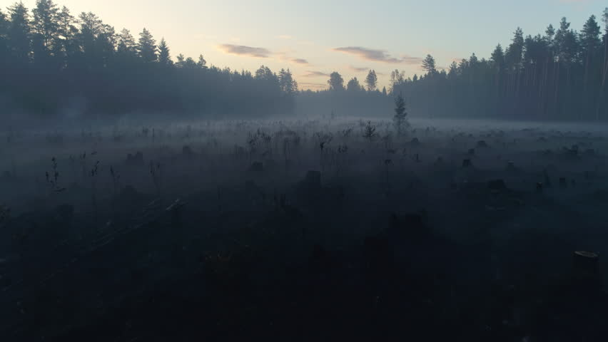 Tree trunks smoking after forest wildfire at sunrise