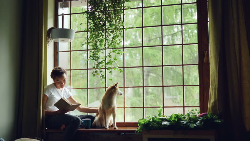 Attractive African American girl student is reading book and stroking her purebred dog sitting on window ledge in modern apartment. Hobby, animals and interior concept. | Shutterstock HD Video #1012911779