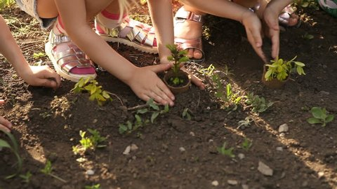 Children's hands planting sapling on soil as the world's concept of rescue