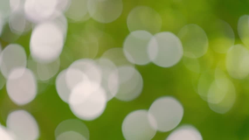 Bokeh light from the sun through the leaves. | Shutterstock HD Video #1012993379