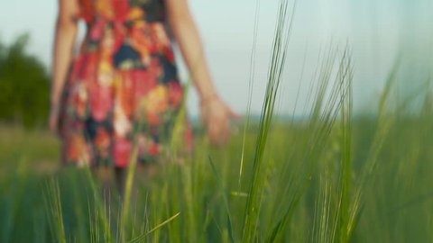 on the front background rye spike. on the background beautiful girl with long leggs in short skirt with flowers walks in a rye field and strokes the rye spikes, slow motion