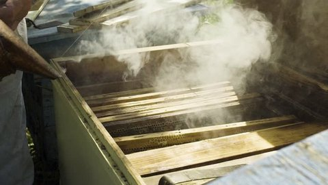 Beekeeper using bee smoker for fumigation beehive, slow motion