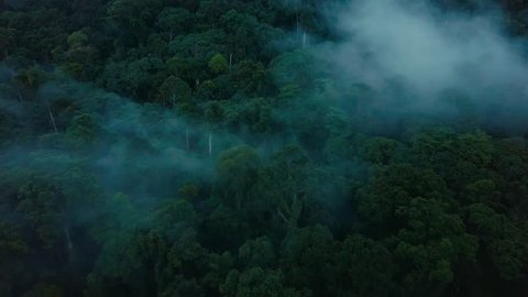 Aerial drone footage of the rainforest at Sabah, Borneo, Malaysia