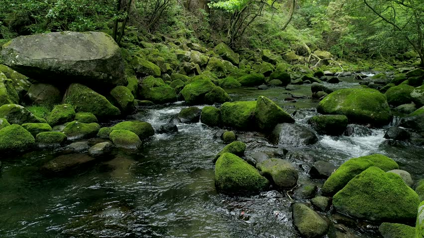 Landscape of clear stream | Shutterstock HD Video #1013695469