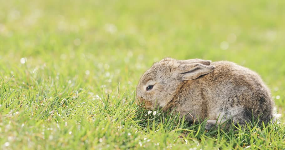 little grey rabbit purpose Alice jane uttley (1884-1976) was born alice taylor at castle top farm, near cromford, derbyshire, and was educated at the lea school in holloway and the lady manners school in bakewell, where she developed a love for science.