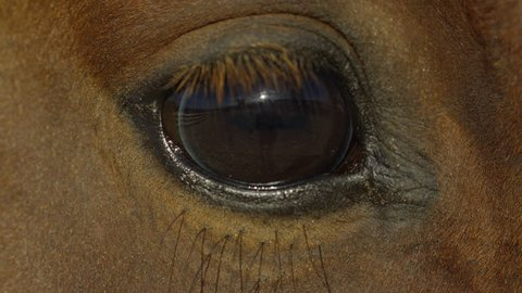 Extreme close up of a horse eye
