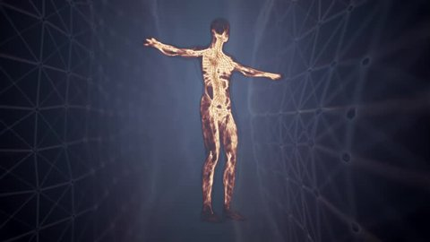 Human anatomy. The anatomical model of a human lymphatic system is rotated around its axis. Loop animation