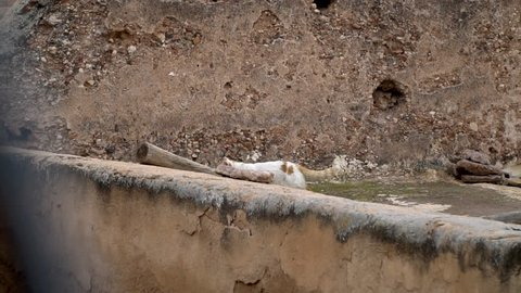A feral cat wandering the rooftops in the Medina section of Marrakech, Morocco.
