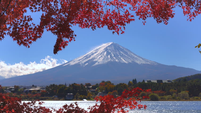 Colorful Autumn in Mount Fuji, Japan - Lake Kawaguchiko is one of the best places in Japan to enjoy Mount Fuji scenery of maple leaves changing color giving image of those leaves framing Mount Fuji. | Shutterstock HD Video #1013836109