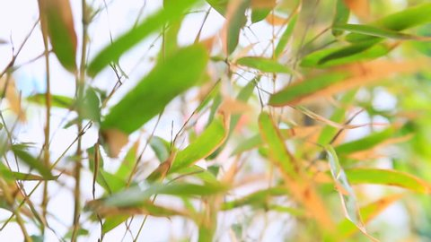 The leaves of the reeds in the wind. Reeds in wind. Grass blown by wind