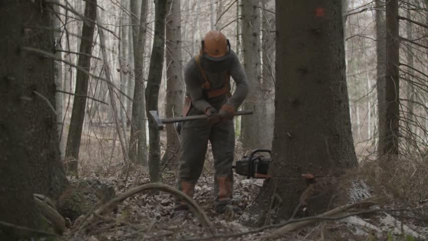 Kocevje/Slovenia- 10-01-2017: Logger is getting out stuck tree.   | Shutterstock HD Video #1014051899