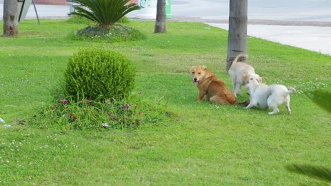 Three young dogs playing together happily outdoors on green grass lawn.