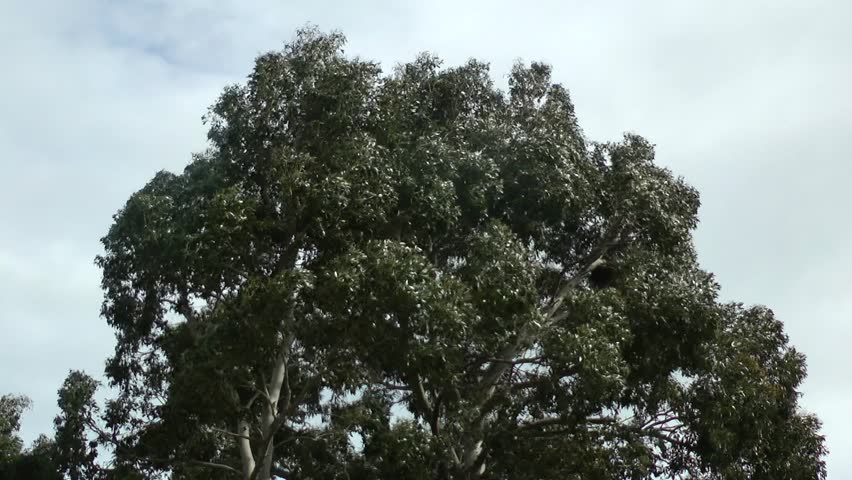 Strong wind blowing tree leaves. | Shutterstock HD Video #1014317279