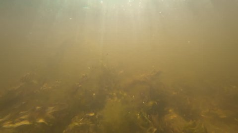Background of a underwater turbid in shallow water