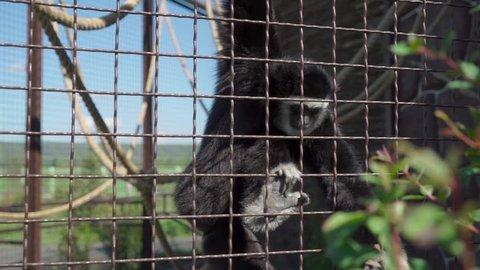 Monkey eats at the zoo