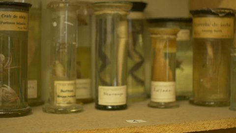Reptiles and other sea animals preserved in formalin solution in zoological laboratory.