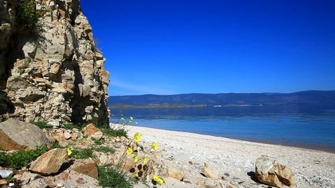 Lake Baikal on a summer morning. A blue cloudless sky and calm water on a sandy beach. Near the steep rocks yellow poppies. The natural sounds of the chirr of grasshoppers