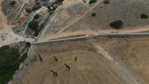 Aerial Drone View of Countryside with Wild Horses in Summer in Menorca