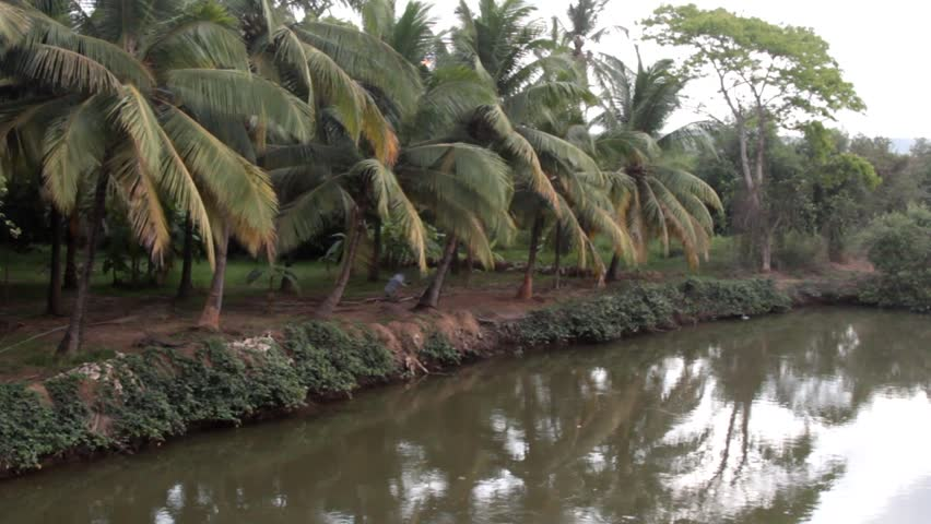 Kerala backwaters. India. Palm trees on the Bank of the canal and shrub thickets with acacia