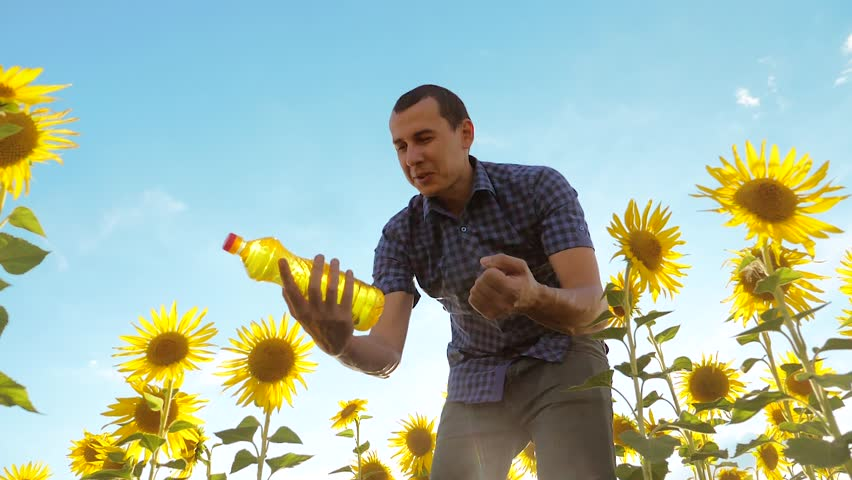 Man farmer working holding in hand a plastic bottle sunflower oil stands in the field. lifestyle slow motion video. sunflower oil production and research agriculture farming. large sunflowers against | Shutterstock HD Video #1015010809