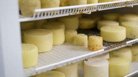 worker is putting formed cheese in a refrigerator into storage in cheese factory, wearing hygienic gloves