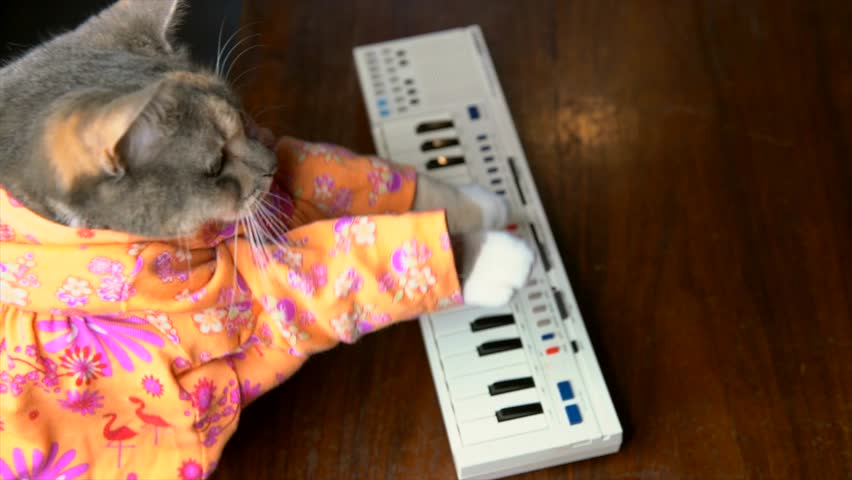 This slow motion top view video shows a cute cat in a colorful shirt playing a keyboard piano.