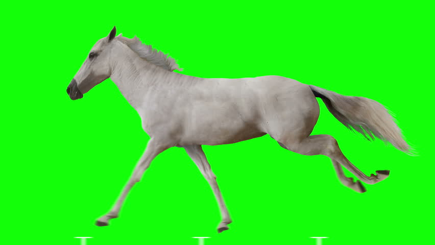 White horse runs gallop. Isolated and cyclic animation. Green Screen. #1015419259