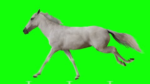 White horse runs gallop. Isolated and cyclic animation. Green Screen.